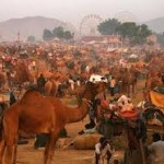 WOULD YOU PUSH FOR THE PUSHKAR FAIR?