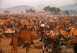 Pushkar Fair BX
