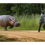 SHOULD I WORRY ABOUT HIPPO ATTACKS IN TANZANIA AND KENYA?